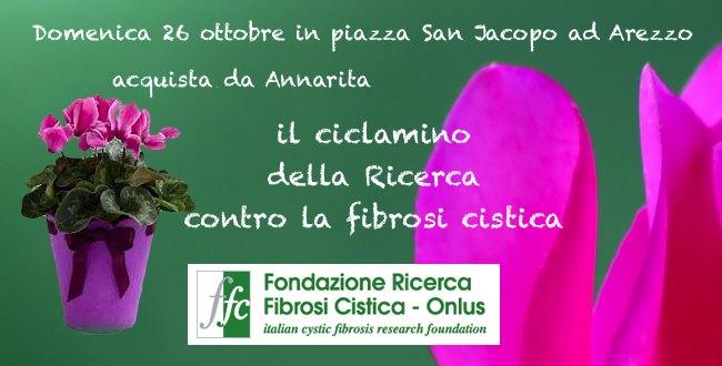 ciclamino_ffc